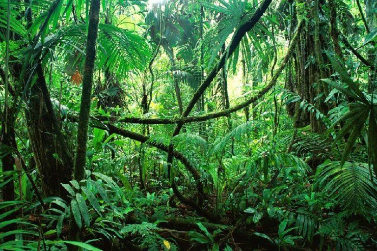 Tropische Pflanzen im Urwald